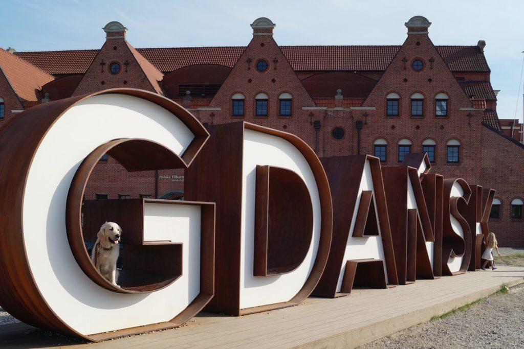 golden retriever gdansk