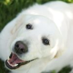 Ile kosztuje i jak wybrać dobry hotel dla psów?