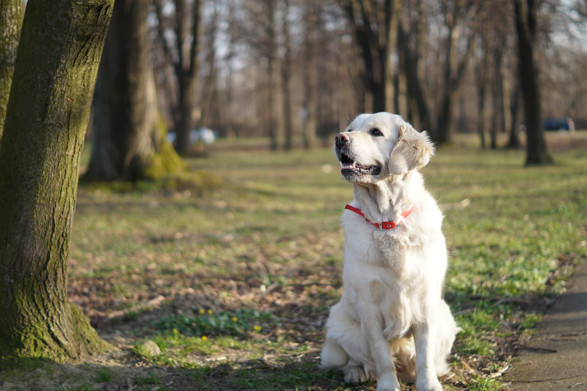 Pies dla rodziny - zestawienie 9 ras psów, które doskonale sprawdzą się w tej roli.