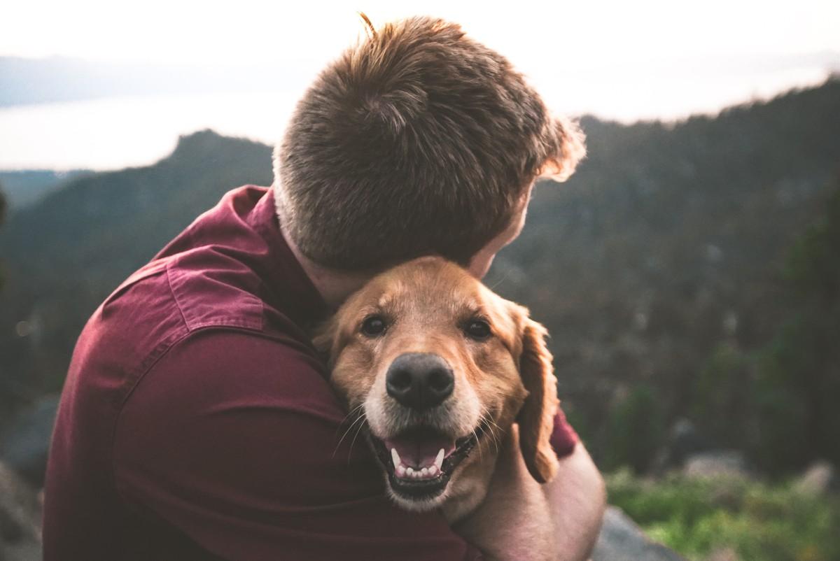 Najlepszy pies dla rodziny cz.1