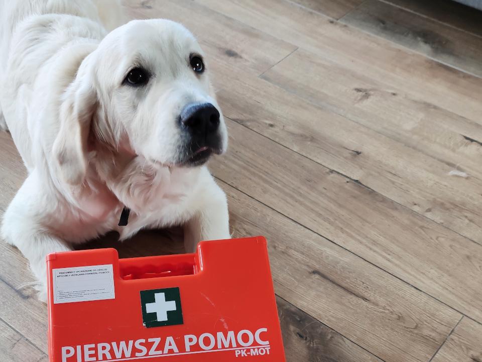 Zdrowie Golden Retrievera, choroby psa