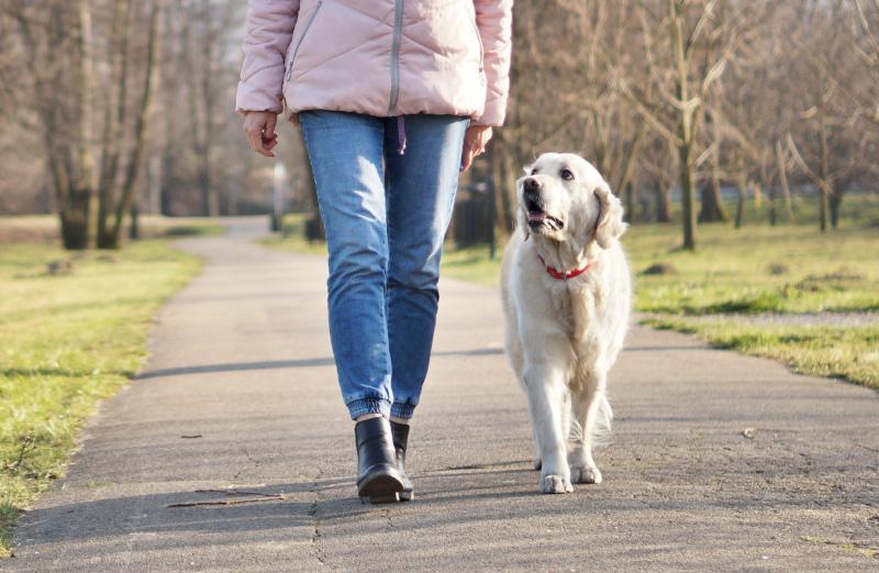 Ile ruchu potrzebuje pies Golden Retriever. Aktywność psa